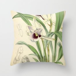 Cochleanthes discolor Orchid 1855 Throw Pillow