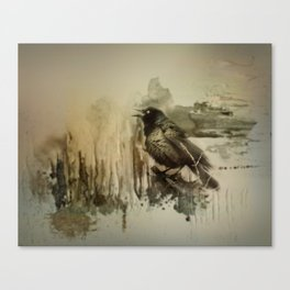 Call Of The Grackle Canvas Print