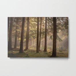 Orange forest - North Kessock, Highlands, Scotland Metal Print