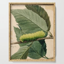 Green Caterpillar Serving Tray