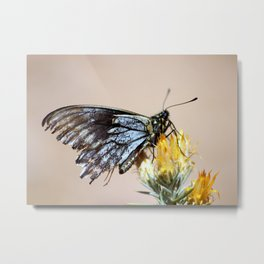 Butterfly with torn wings Metal Print