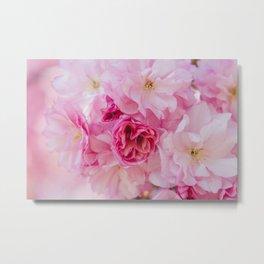 Cherry Blossom Bloom Metal Print