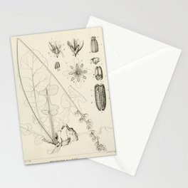 Vintage Scientific Print - 1824 - Wedding Flower Stationery Cards