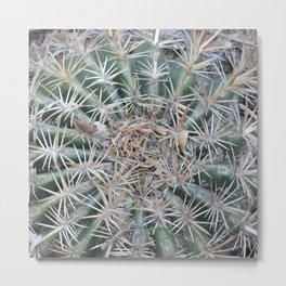 TEXTURES -- Coast Barrel Cactus Metal Print