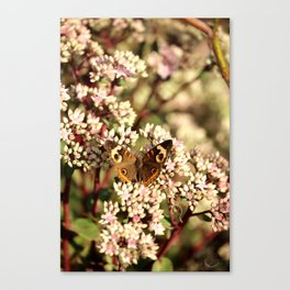 Buckeye Butterfly On Pale Pink Flowers Canvas Print
