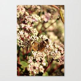 Buckeye Butterfly On Pale Pink Flowers Canvas Print