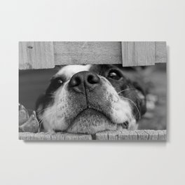 dog looking through fence Metal Print