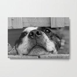 dog looking through fence Metal Print