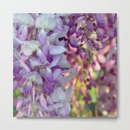 The scent of wisteria Metal Print