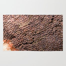 Pinecone Rug