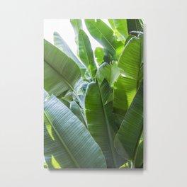 Banana Leaves | Green | Home Decor | Art Print | Tropical Plant Metal Print