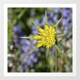 Yellow salsify wildflower against lupine Art Print