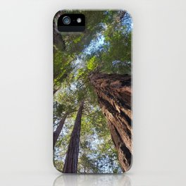 Muir Woods Tranquility  #2 iPhone Case
