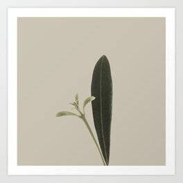 Plant Variations 8 Art Print