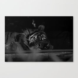 Just lazing about Canvas Print
