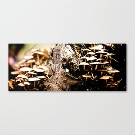 Mushroom party Canvas Print