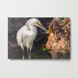 Egret with Prey Metal Print