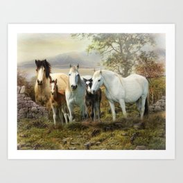 Connemara Ponies Art Print