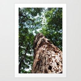 Forest elder Art Print