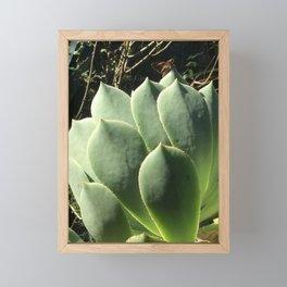 Aeonium lancerottense succulent Framed Mini Art Print