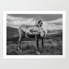 Reindeer | Scotland | Cairngorms National Park | Highlands | Travel Photography Art Print