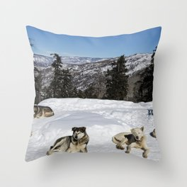 Sled dogs get a breather in the Rocky Mountain backcountry near the ski resort of Snowmass Village C Throw Pillow