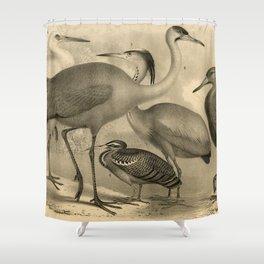 Water Birds #33 Shower Curtain