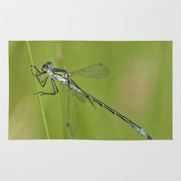 Blue dragonfly Rug