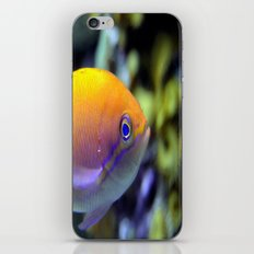 Hey fish!  iPhone & iPod Skin