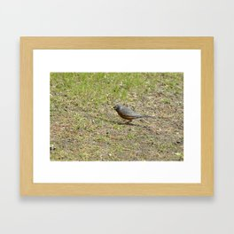Robin's Breakfast Grub Framed Art Print
