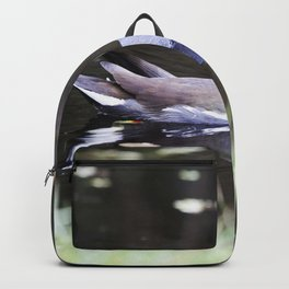 A common gallinule swims in a waterway at NASAs Kennedy Space Center in Florida Backpack