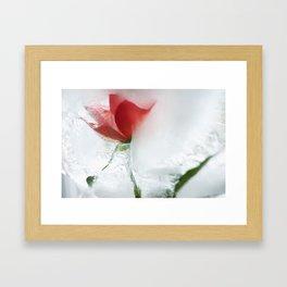 Ice cold rose Framed Art Print
