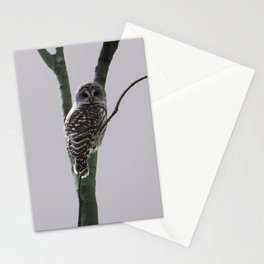 Barred Owl with Grey Stationery Cards