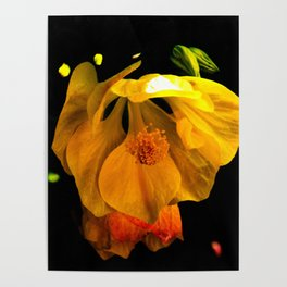 tropical flower Poster