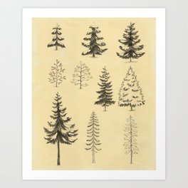 Pines and Spruces Art Print