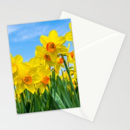 Golden daffodil narcisus flowers vibrantly coloured against bright blue sky Stationery Cards