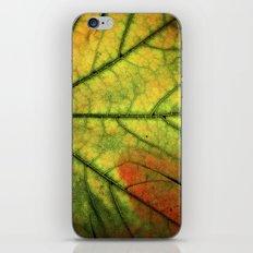 Fall Leaf II iPhone & iPod Skin