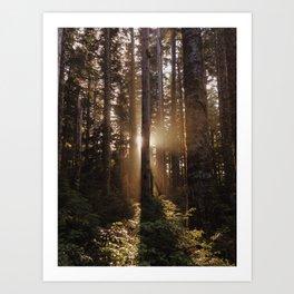 Larch Mountain Sunset Art Print