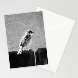 Sparrow BW Stationery Cards