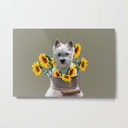 Milk can with fox terrier and sunflowers Metal Print