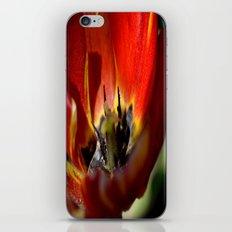 Red Tulip 2 iPhone & iPod Skin