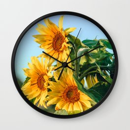 Three big flower sunflowers in a field Wall Clock