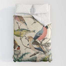 19th century bird illustration from Das Buch der Welt, 1862 Comforters