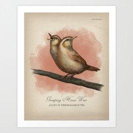Gossiping House Wren Art Print