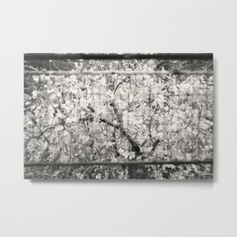 Colourless Tree Metal Print