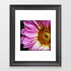 USA - NASHVILLE - Dahlia in the Morning Framed Art Print