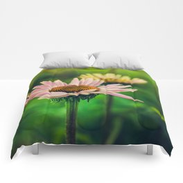 Daisy VI Comforters