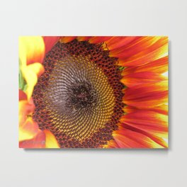Sunflower from the Color Fashion Mix Metal Print