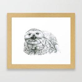Snowy Owl (Bubo scandiacus) Framed Art Print
