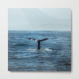 Whale tail - Hamptons Style Metal Print